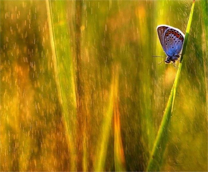 макросъемка живой природы