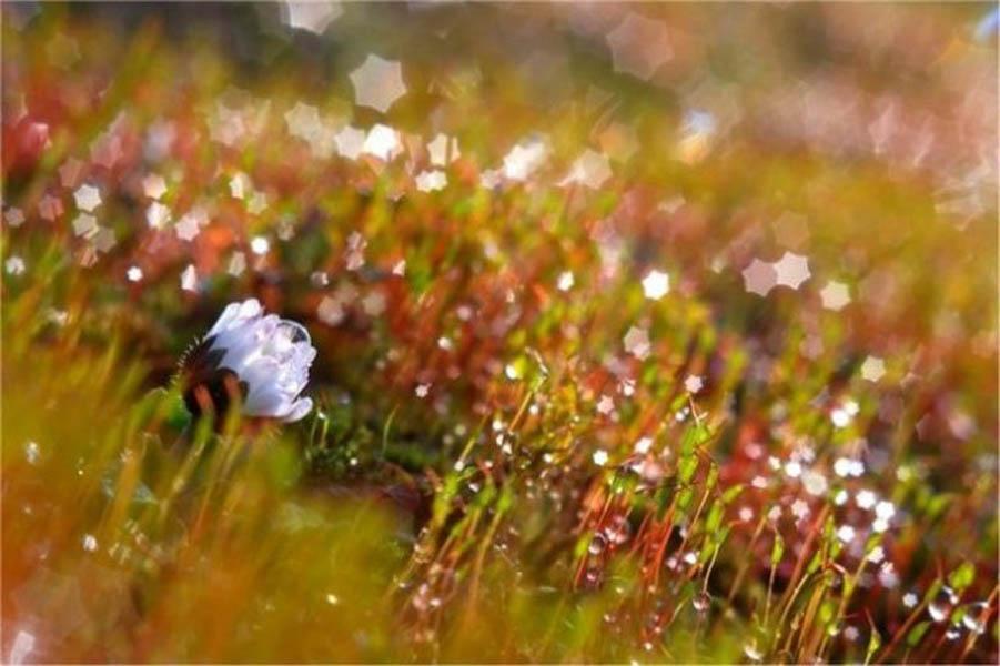 макрокартины живой природы