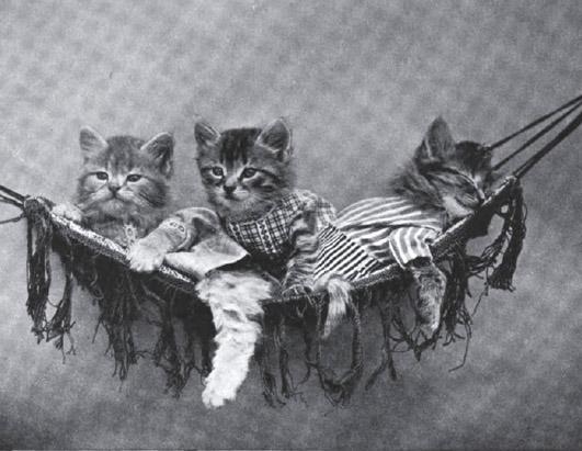 Винтажный котята гамак фотоколлаж