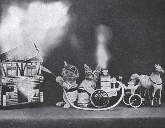 Винтажные коты пожар фотоколлаж