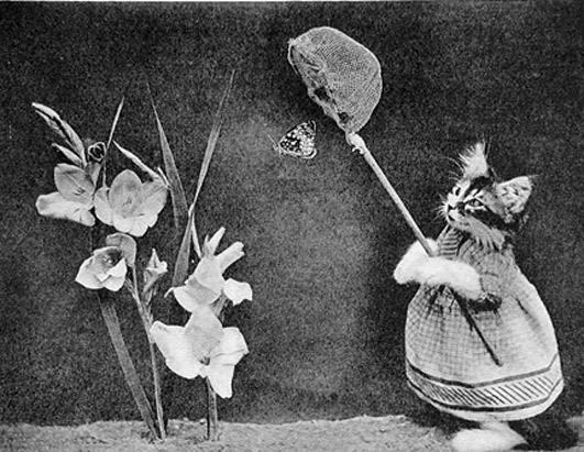 Винтажные коты бабочка фотоколлаж