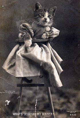Винтажный котенок в платье фотоколлаж