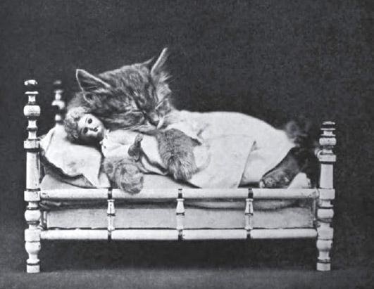 Винтажные коты постель фотоколлаж