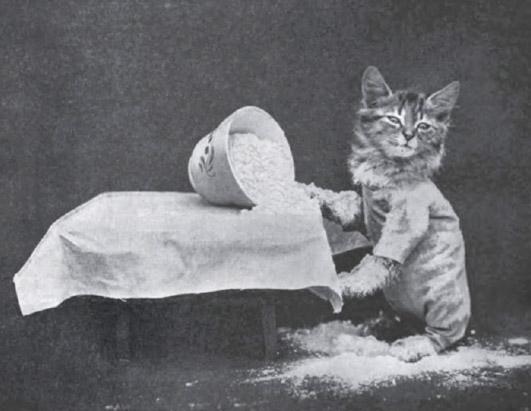 Винтажный котята просыпал муку фотоколлаж