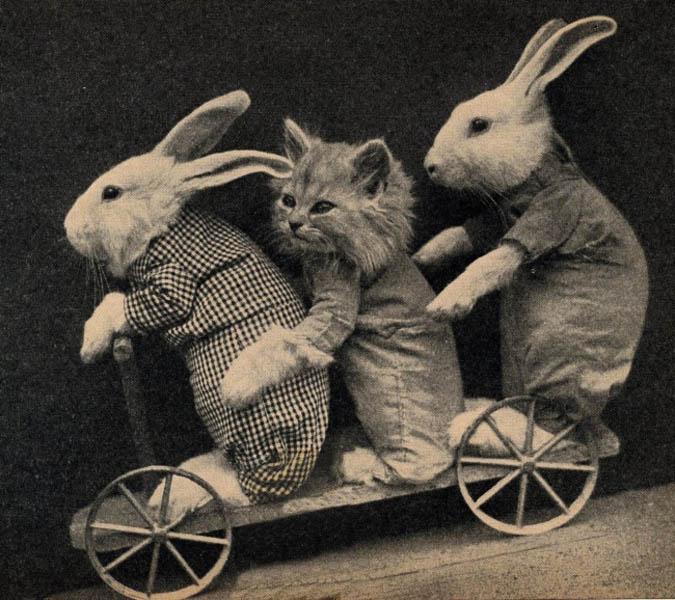 Винтажный котенок и кролики фотоколлаж