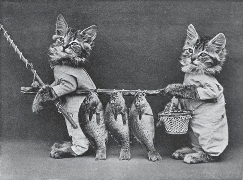 Винтажный котята фотоколлаж