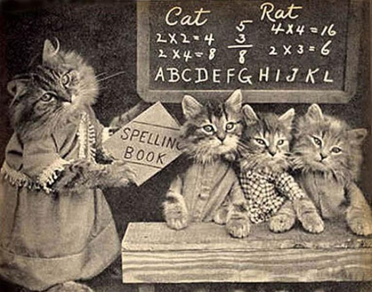 Винтажный котята ученики фотоколлаж