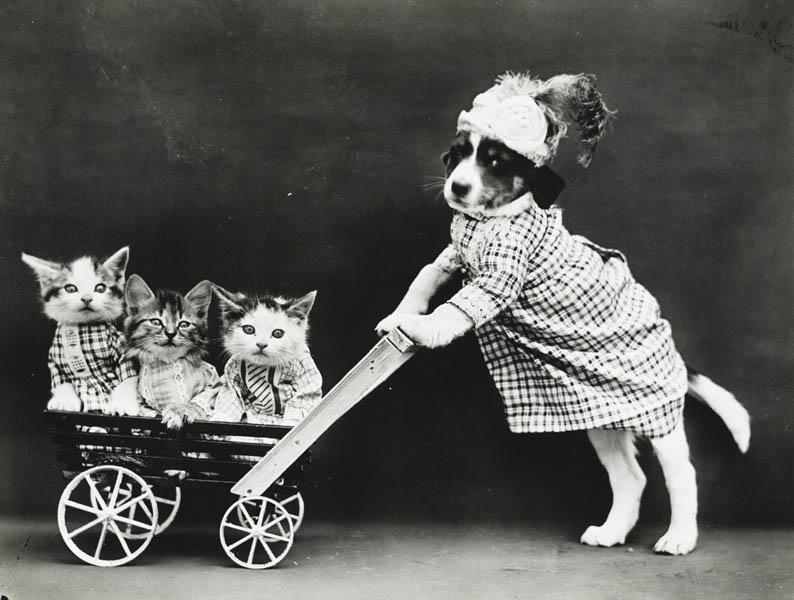 Винтажный котята и пес фотоколлаж