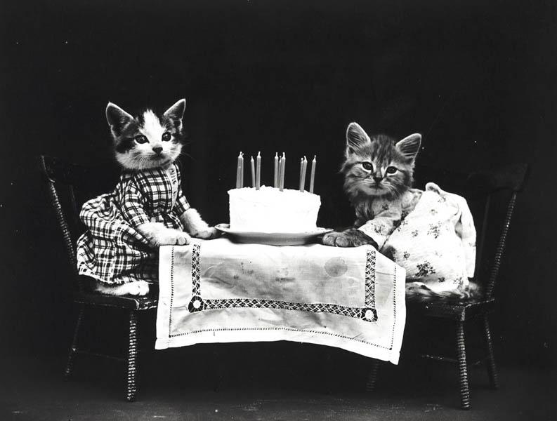 Винтажный котята день рождения фотоколлаж