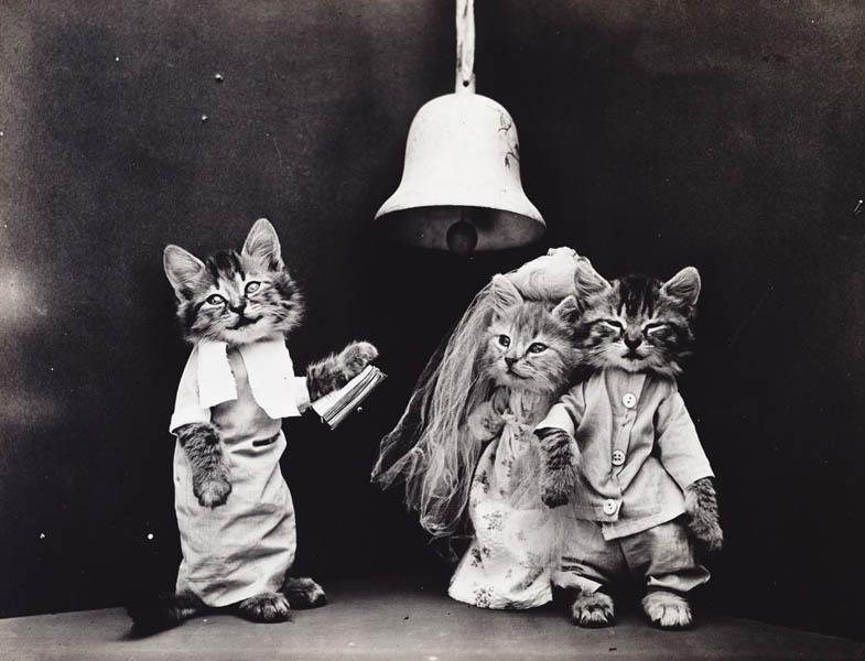 Винтажный котята друзья фотоколлаж
