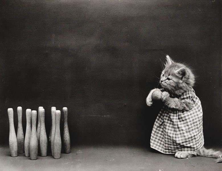 Винтажный котята боулинг фотоколлаж