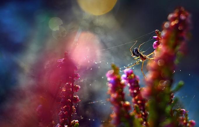 Макрофотограф цветы Магдалена Васичек