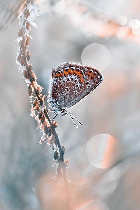 Макрокартина красивая бабочка Магдалена Васичек
