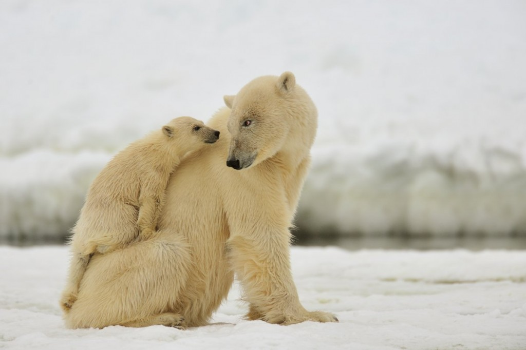 ijsbeermoeder_met_jong_yves_adams