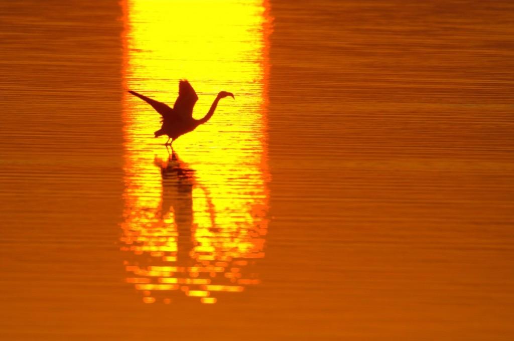 opvliegende_flamingo_yves_adams