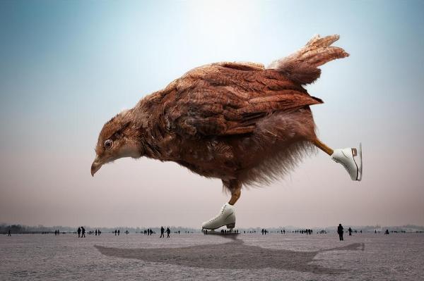 Фотограф Джон Вильгельм фотоколлаж цыпленок
