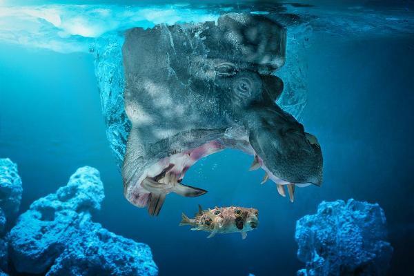 Фотограф Джон Вильгельм гиппопотам рыбка
