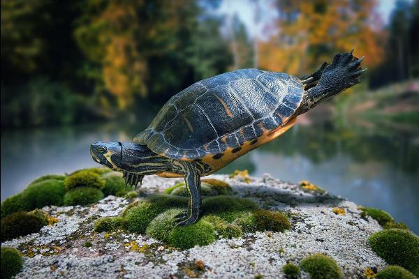 Фотограф Джон Вильгельм фотоколлаж черепаха