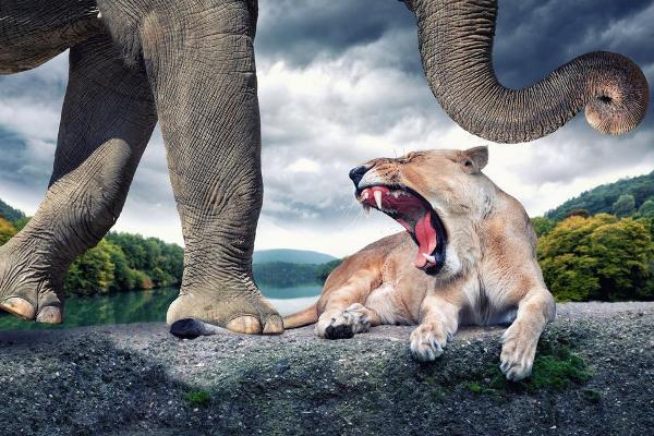 Фотограф Джон Вильгельм фотоколлаж лев и слон
