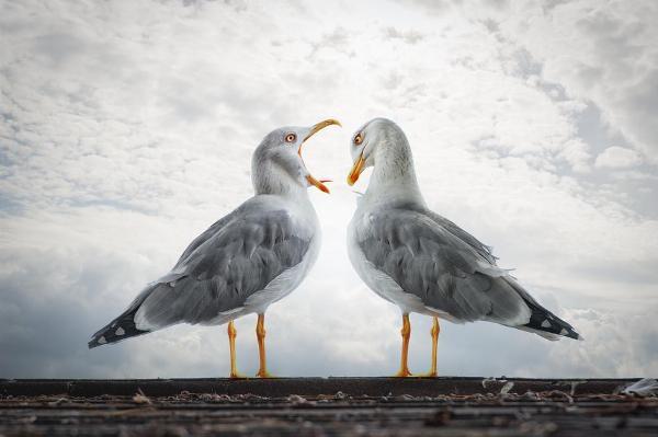 Фотограф Джон Вильгельм фотоколлаж чайки