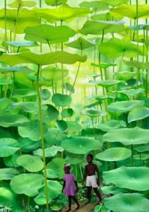 Рууд Ван Эмпл фотоколлаж дети в джунглях