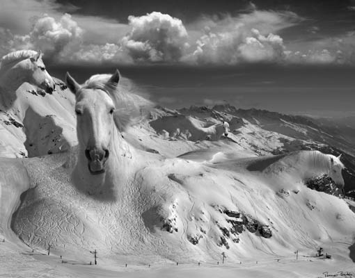 Фотоколлаж Томаса Барбе лошади