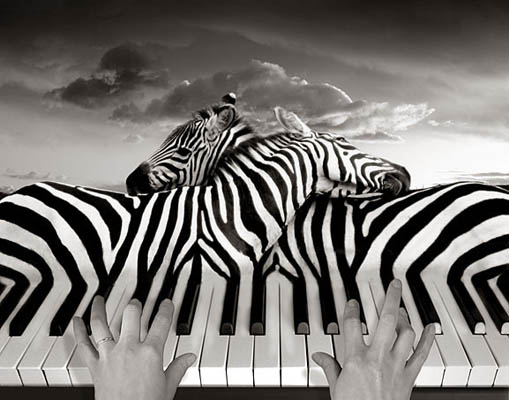 Фотоколлаж Томаса Барбе зебры