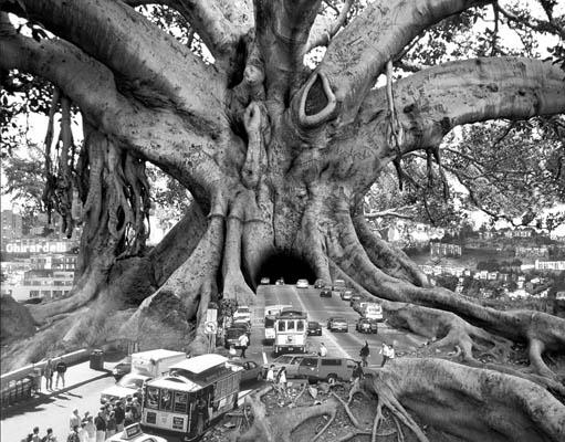 Thomas-Barbe-10Фотоколлаж Томаса Барбе дерево