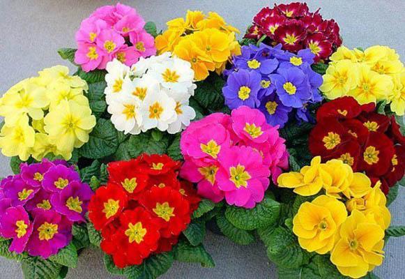 Как сделать жизнь яркой цветы
