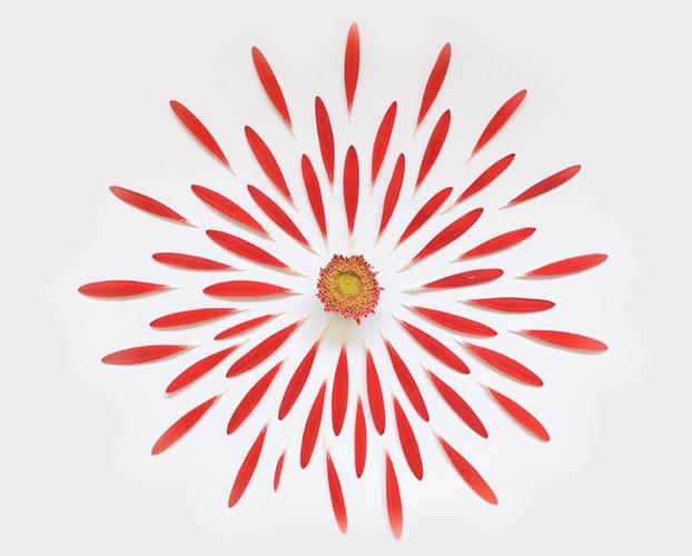 Цветочные бомбы из лепестков сияние