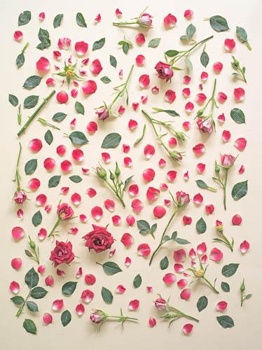 цветочный фотопроект Фонг Ци Вэй фото