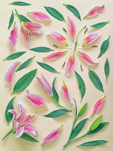 цветочный фотопроект фото