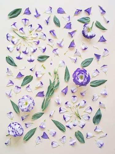 цветочные бомбы Фонг Ци Вэй нежность